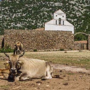 San Pietro - Altopiano di Golgo